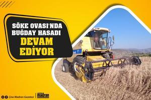 Söke  Ovasında  bu sezon 70 bin dekar buğday ekimi yapıldı