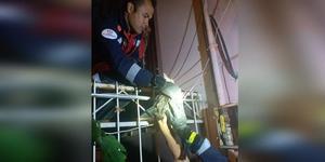 Denizli'nin Pamukkale ilçesinde, korkuluk demirine boğazı saplanan kediyi itfaiye ekipleri kurtardı.